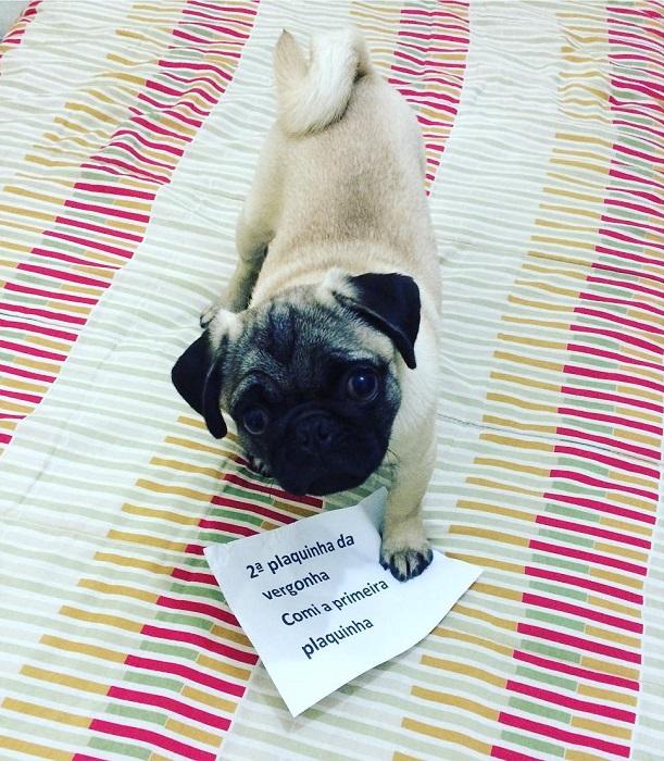 """18 cachorros que aprontaram e receberam a """"plaquinha da vergonha"""" 15"""