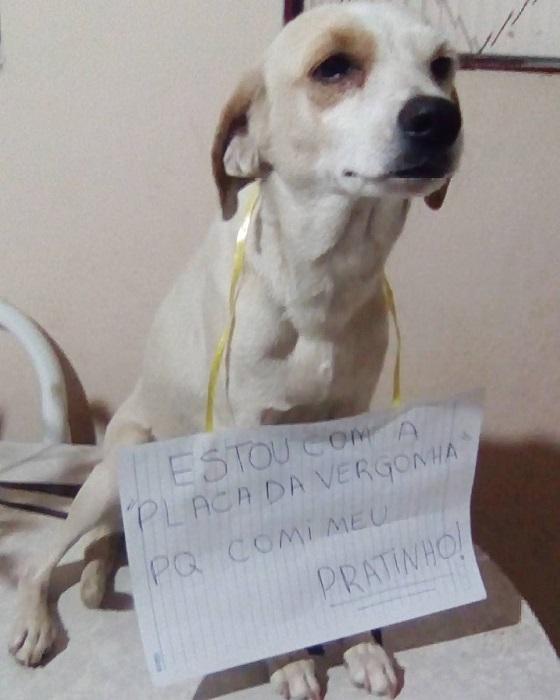 """18 cachorros que aprontaram e receberam a """"plaquinha da vergonha"""" 17"""