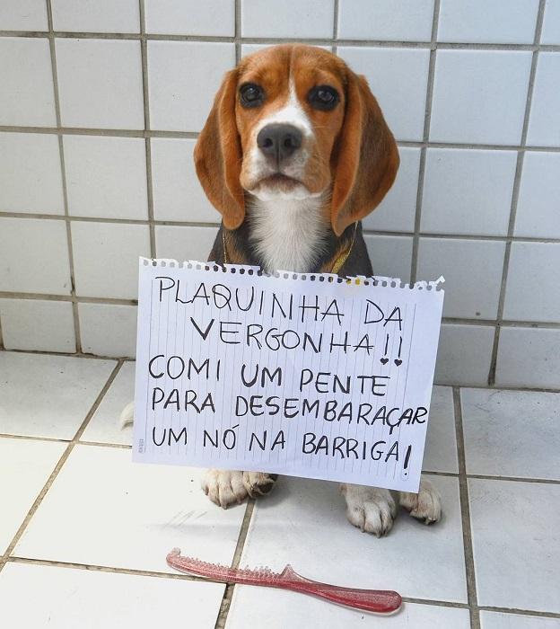 """18 cachorros que aprontaram e receberam a """"plaquinha da vergonha"""" 19"""