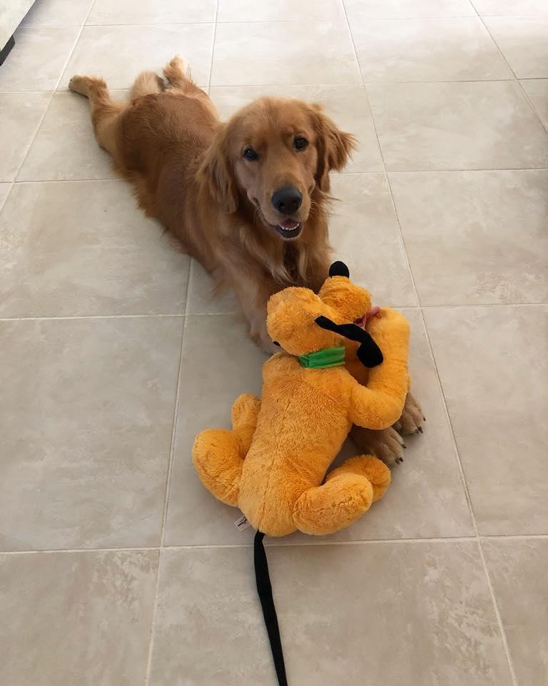 A reação deste cão guia ao conhecer seu brinquedo favorito pessoalmente é só amor 4