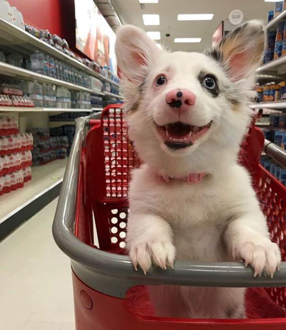 O dia mais feliz deste filhote foi quando fez compras pela primeira vez 3