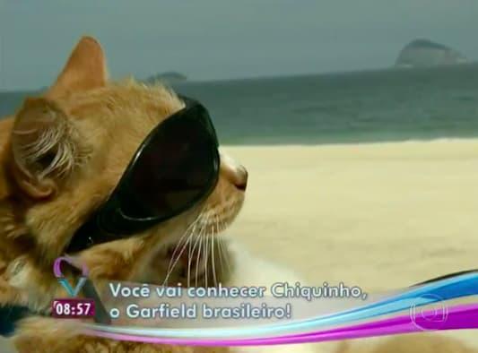 Gato com óculos escuros numa moto no Rio é a coisa mais brasileira que pode acontecer 5