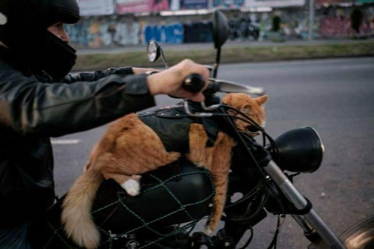 Gato com óculos escuros numa moto no Rio é a coisa mais brasileira que pode acontecer 6