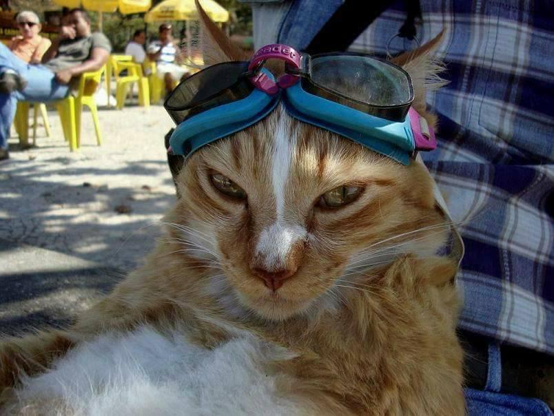 Gato com óculos escuros numa moto no Rio é a coisa mais brasileira que pode acontecer 9