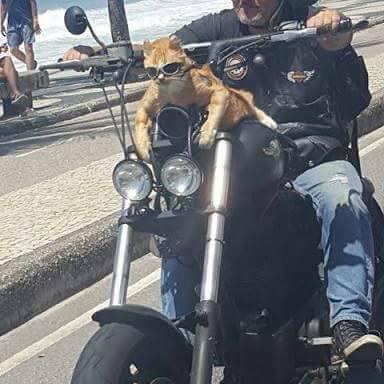 Gato com óculos escuros numa moto no Rio é a coisa mais brasileira que pode acontecer 10