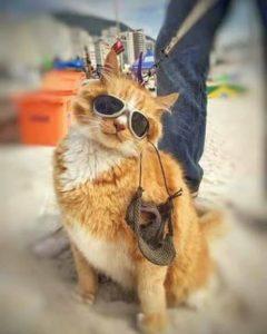Gato com óculos escuros numa moto no Rio é a coisa mais brasileira que pode acontecer 11
