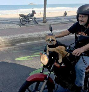 Gato com óculos escuros numa moto no Rio é a coisa mais brasileira que pode acontecer 12