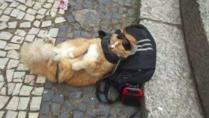 Gato com óculos escuros numa moto no Rio é a coisa mais brasileira que pode acontecer 14