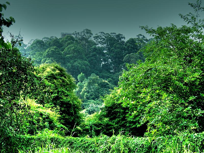 A moeda virtual BitSeeds irá plantar 1 bilhão de árvores no mundo! 1