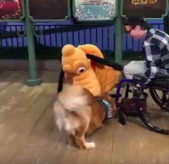 A reação deste cão guia ao conhecer seu brinquedo favorito pessoalmente é só amor 6
