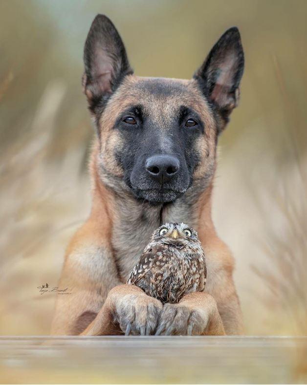 Esse Cachorro Cuidou Dessa Coruja E Desde Então Eles São Amigos