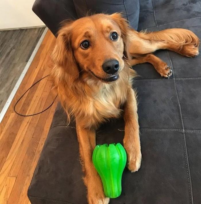 Cachorro detesta tomar banho e por isso acha que seus donos também 4