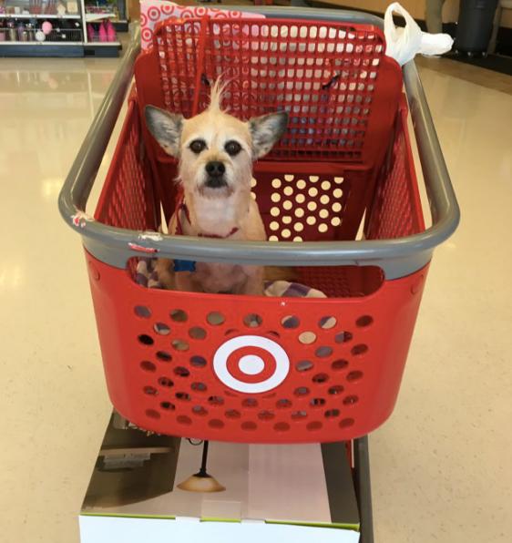 O dia mais feliz deste filhote foi quando fez compras pela primeira vez 7