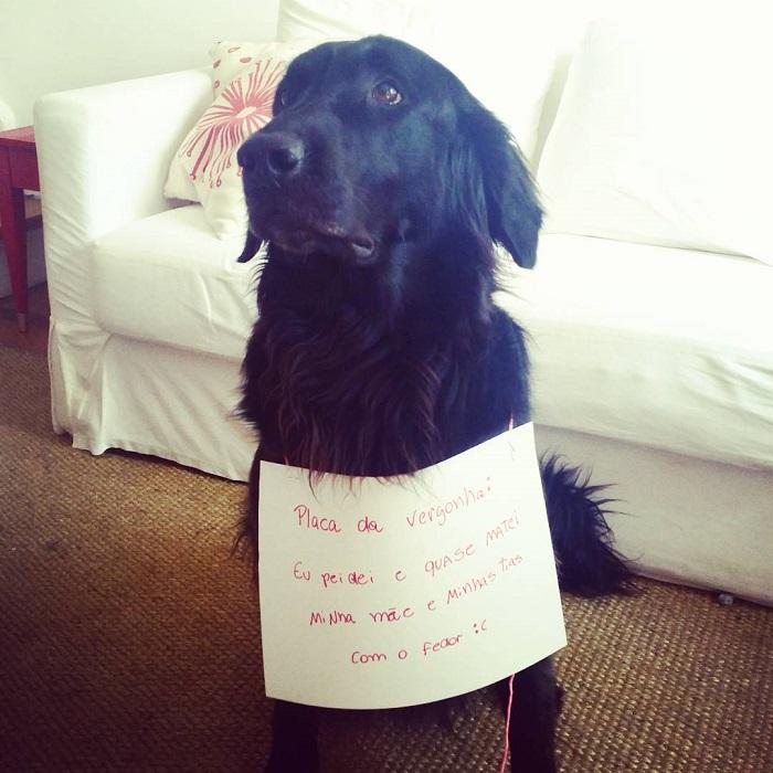 """18 cachorros que aprontaram e receberam a """"plaquinha da vergonha"""" 7"""