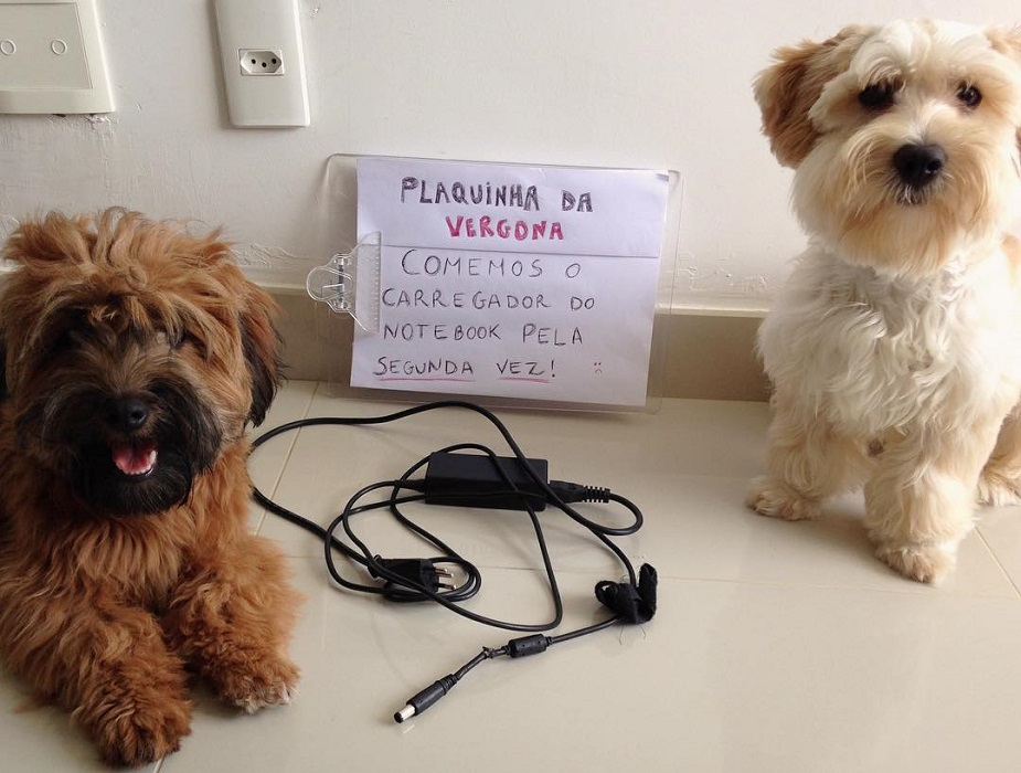"""18 cachorros que aprontaram e receberam a """"plaquinha da vergonha"""" 9"""