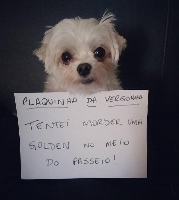 """18 cachorros que aprontaram e receberam a """"plaquinha da vergonha"""" 10"""