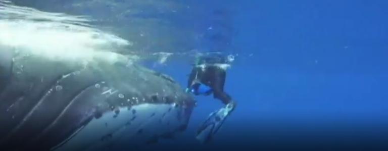 Esta incrível baleia salvou bióloga de um ataque de tubarão 1