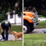 [VÍDEO] Essa cadela que espera o lixeiro chegar para brincar é só amor! 2