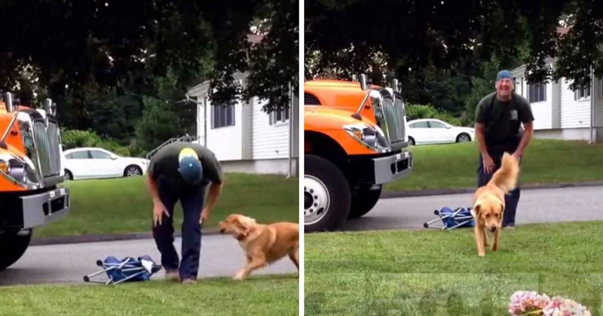 [VÍDEO] Essa cadela que espera o lixeiro chegar para brincar é só amor! 4