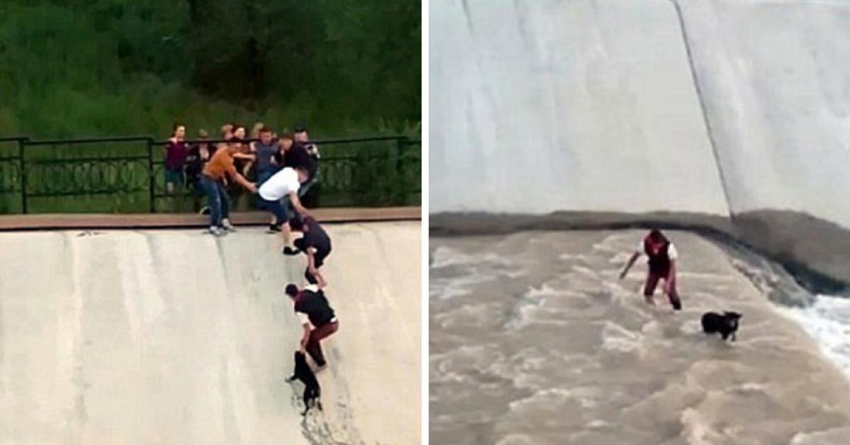 Cachorro cai em rio e é salvo graças a união de cinco pessoas: corrente humana 2