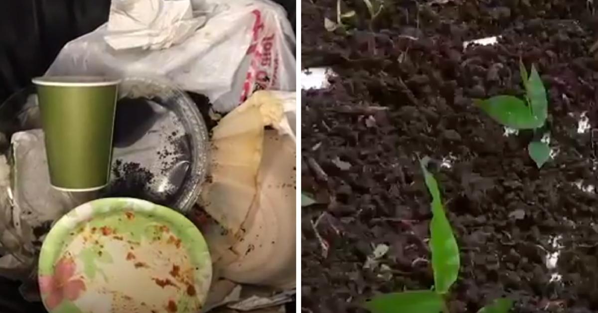 Empresa colombiana produz prato descartável que pode ser plantado 2