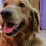 Cachorro foge de casa para encontrar amigos em spa canino 3