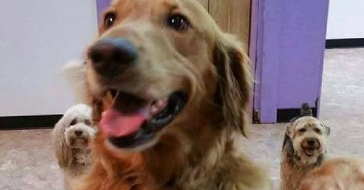 Cachorro foge de casa para encontrar amigos em spa canino 1