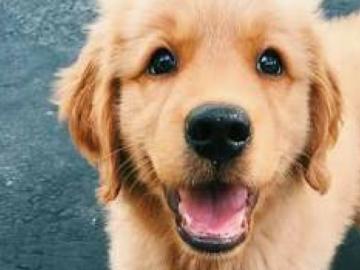 Funcionários que adotarem cachorros ganharão folga em cervejaria escocesa 4