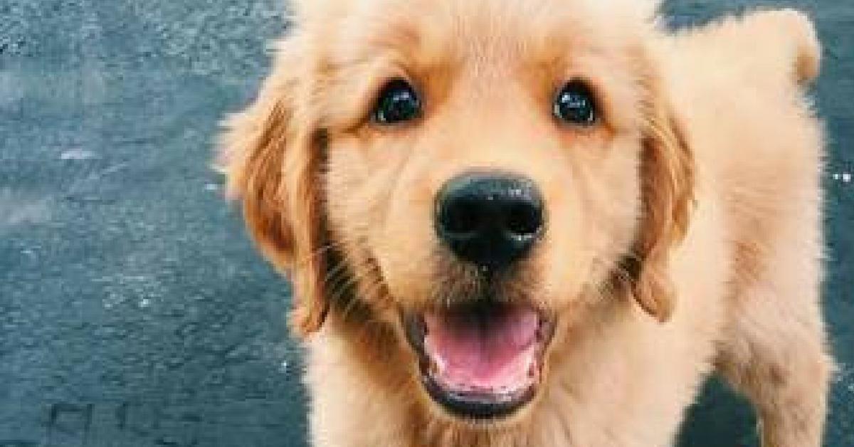 Funcionários que adotarem cachorros ganharão folga em cervejaria escocesa 8