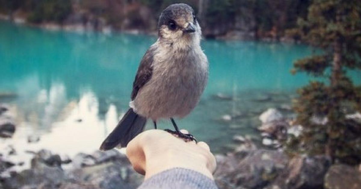 Viver perto de pássaros faz bem para a saúde mental das pessoas 1