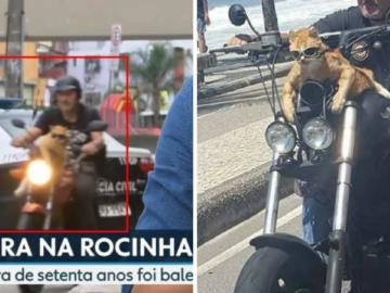 Gato com óculos escuros numa moto no Rio é a coisa mais brasileira que pode acontecer 7