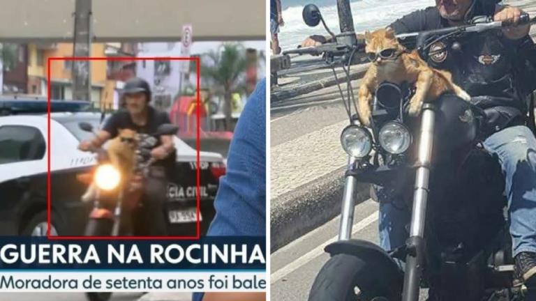 Gato com óculos escuros numa moto no Rio é a coisa mais brasileira que pode acontecer 1