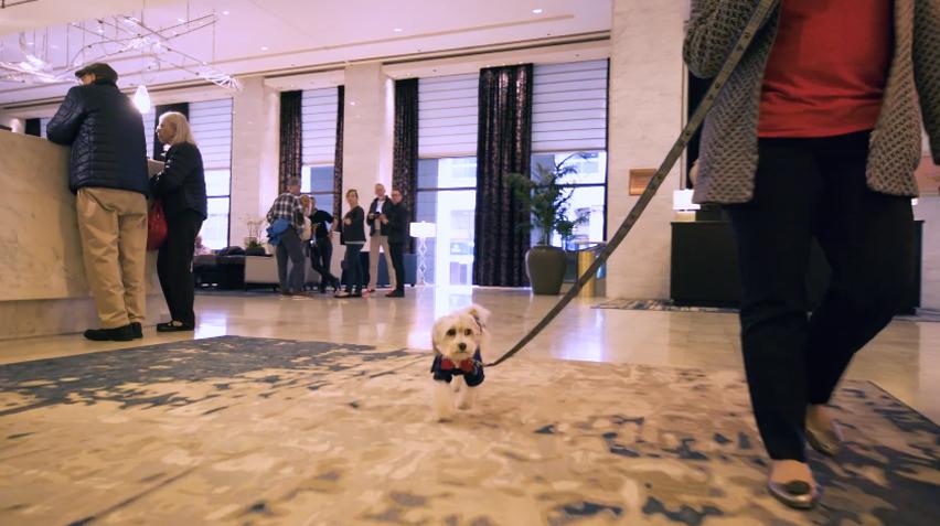 O serviço de quarto deste hotel oferece aos hóspedes o aconchego de um cãozinho 3