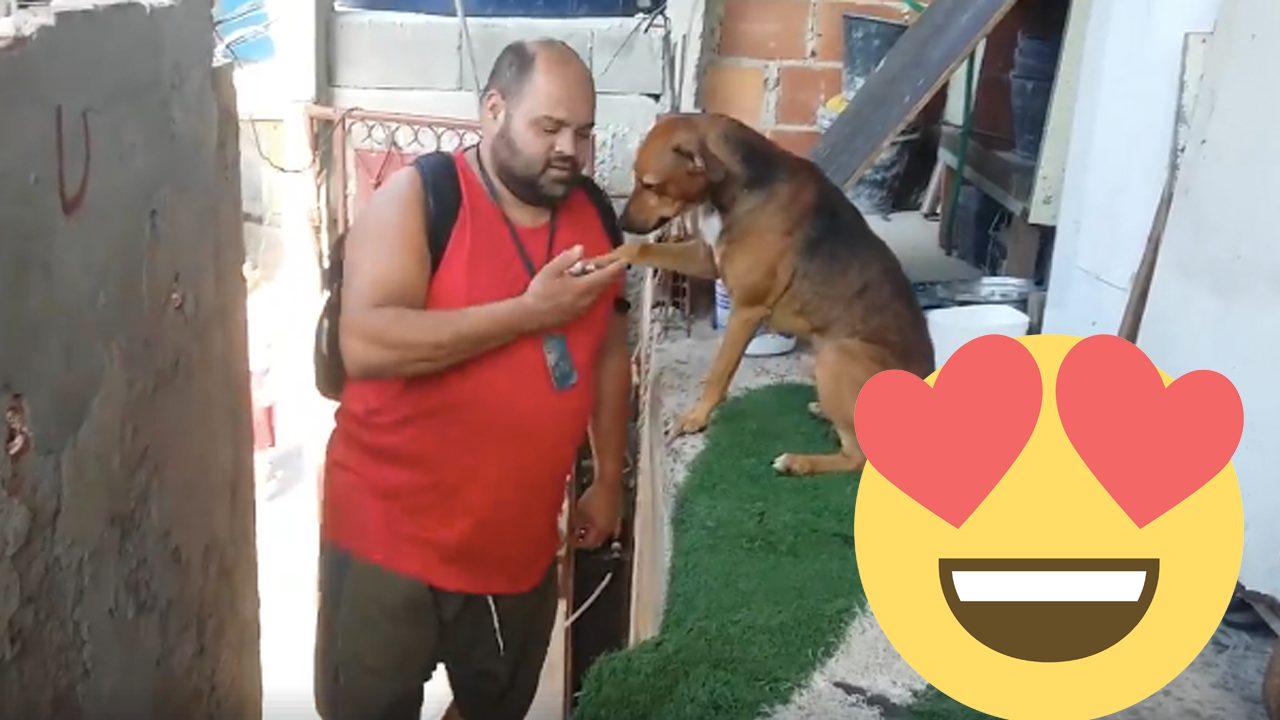 """Cachorro """"pede benção"""" ao dono todo dia quando ele chega do trabalho 1"""