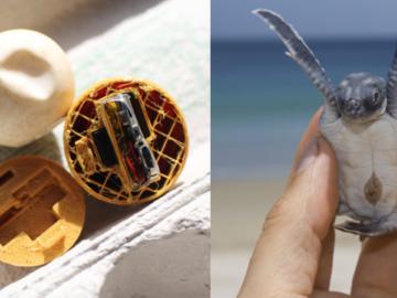 """Estes ovos """"fakes"""" de tartaruga marinha estão ajudando a quebrar o mercado ilegal 1"""