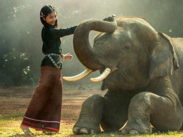China proíbe comércio de marfim: finalmente! 11