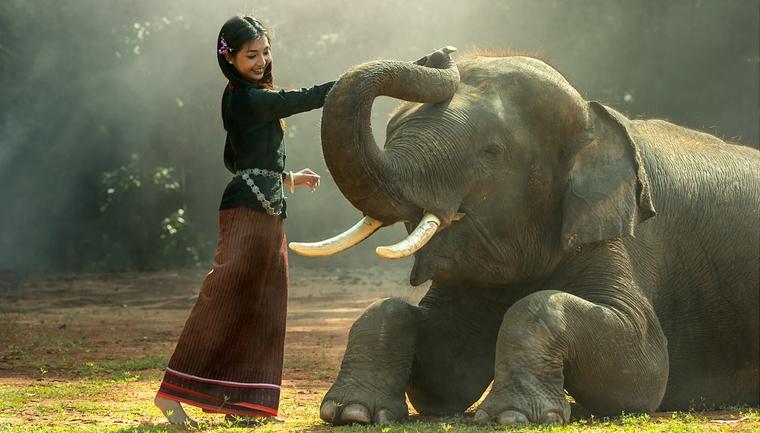 China proíbe comércio de marfim: finalmente! 2
