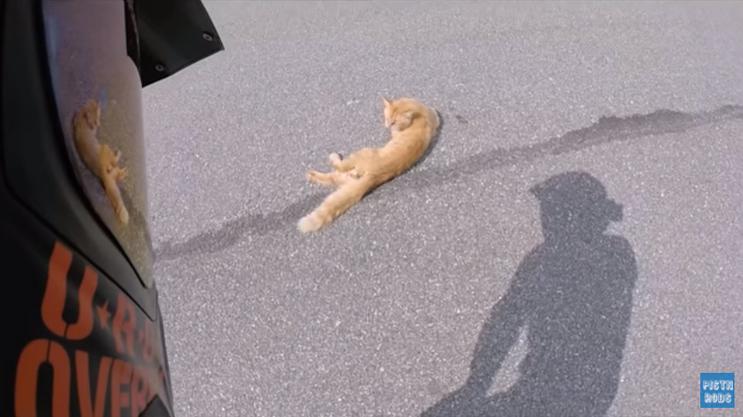 Motociclista resgata gato ferido na estrada e viaja com ele dentro da jaqueta por 1 hora 2