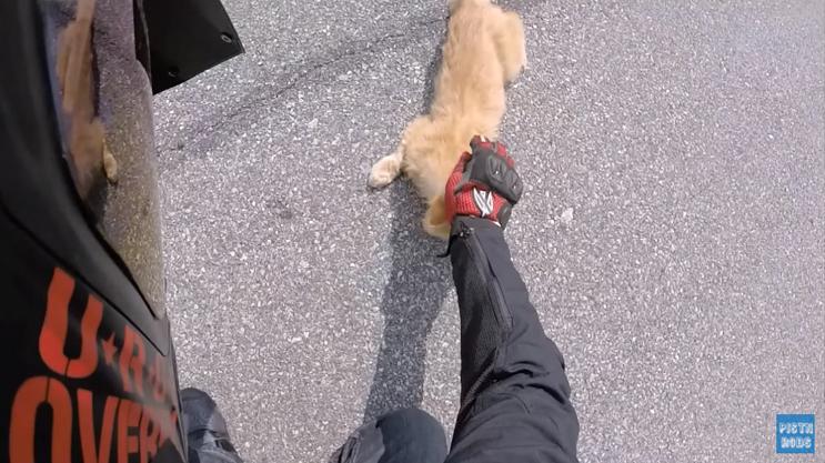 Motociclista resgata gato ferido na estrada e viaja com ele dentro da jaqueta por 1 hora 3