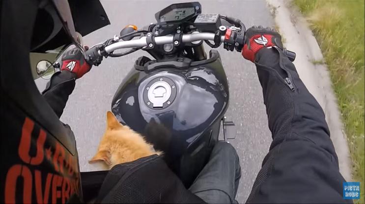 Motociclista resgata gato ferido na estrada e viaja com ele dentro da jaqueta por 1 hora 4