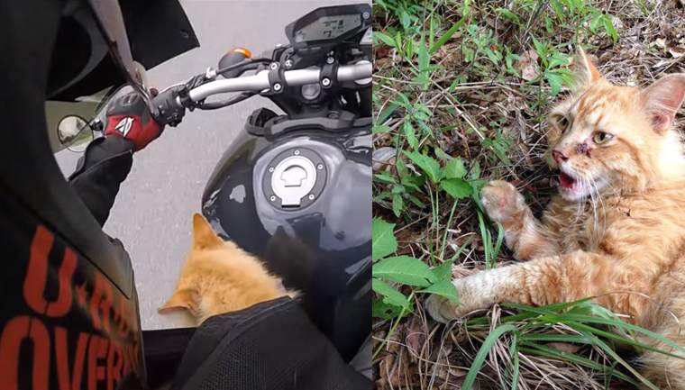 Motociclista resgata gato ferido na estrada e viaja com ele dentro da jaqueta por 1 hora 5