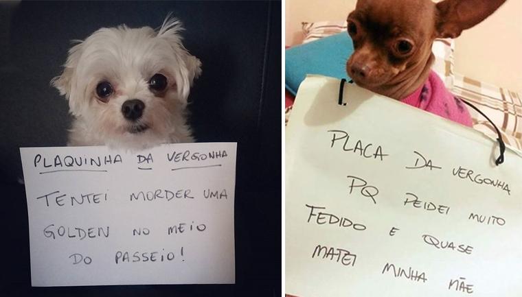 """18 cachorros que aprontaram e receberam a """"plaquinha da vergonha"""" 20"""