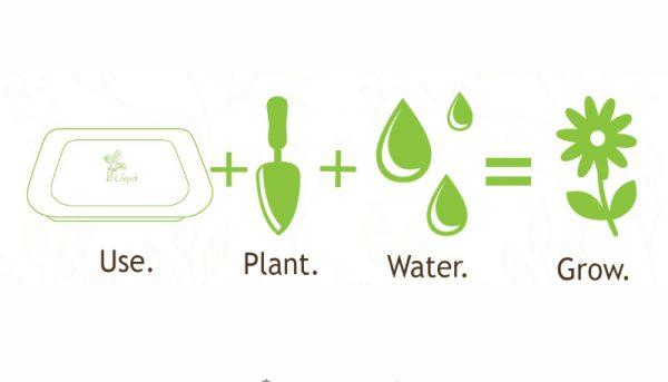 Empresa colombiana produz prato descartável que pode ser plantado 1