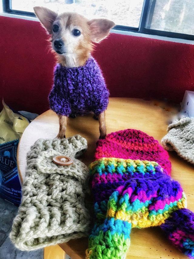 Cadelinha doente abandonada pelo dono ganha um novo lar (e muitos suéters!<3) 3