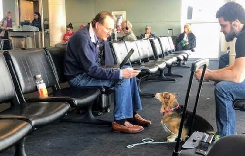 Cadela resgatada que 'sente quem está sofrendo' conforta desconhecido em aeroporto 2