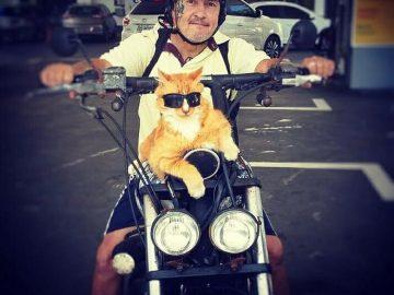 O gato de óculos escuros é mais do que um companheiro! Ele que ajuda seu dono a se manter longe das drogas! 22