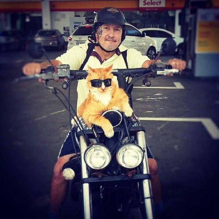 O gato de óculos escuros é mais do que um companheiro! Ele que ajuda seu dono a se manter longe das drogas! 1