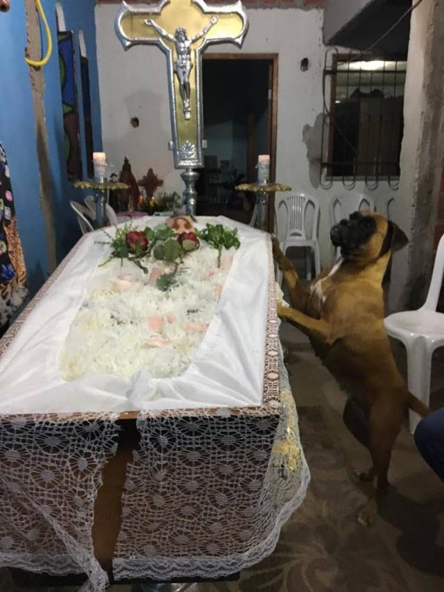 """""""O amor não é exclusivo dos humanos"""": cadela passa velório todo ao lado do caixão da dona 4"""