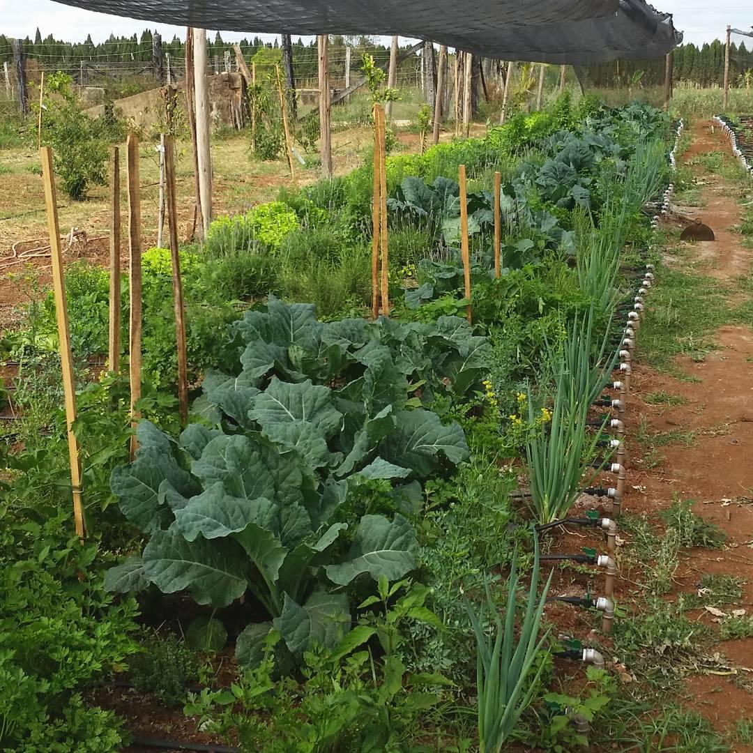 Plataforma online possibilita adotar horta e galinha e receber os alimentos em casa 4