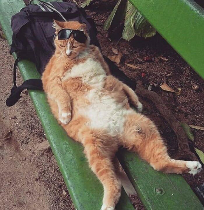 O gato de óculos escuros é mais do que um companheiro! Ele que ajuda seu dono a se manter longe das drogas! 3
